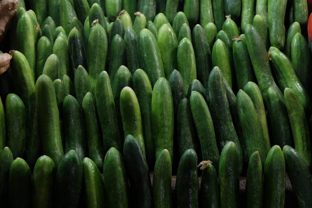 a collection of cucumbers in varying sizes
